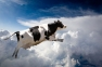 cow jumping through clouds