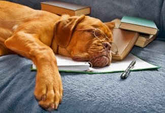 sleeping dog with books and pen